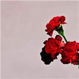 John Legend - Love In The Future (Deluxe Edition)