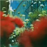 Pulled Apart By Horses - The Haze
